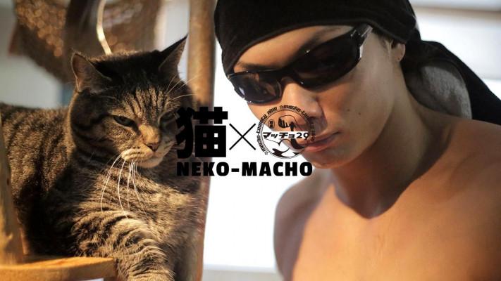 猫マッチョ 【MUSCLE-001 サイヤマングレート #2】